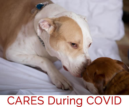 CARES During COVID